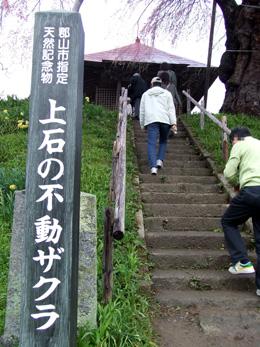 石部桜⑦.JPG