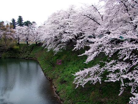 石部桜⑭.JPG