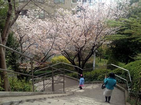 花見①.JPG